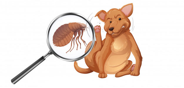 perro pulga